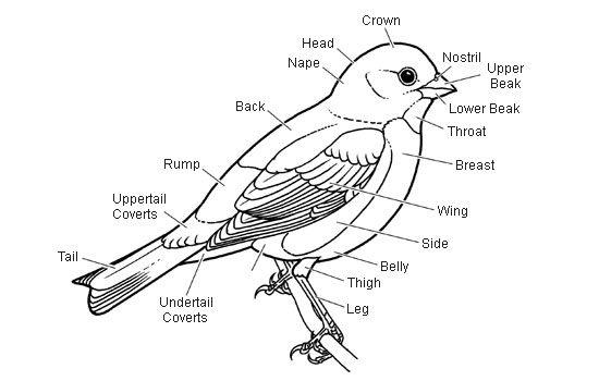 bird topography parts of a bird