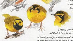 Naturalist's Notebook: Phenomenal Migration in Louisiana
