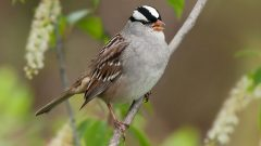 The Basics: How Birds Navigate When They Migrate