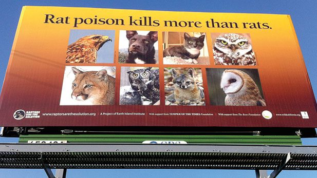 The advocacy group Rapters Are The Solution (RATS) has launched a campaign using billboards in Northern California (above) and signs in buses and trains in the San Francisco Bay area to make the public aware of the danger these poisons pose to wildlife as well as pets. Photo by Mourad Gabriel