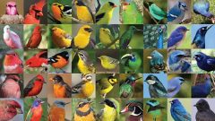 Birds of many different colors