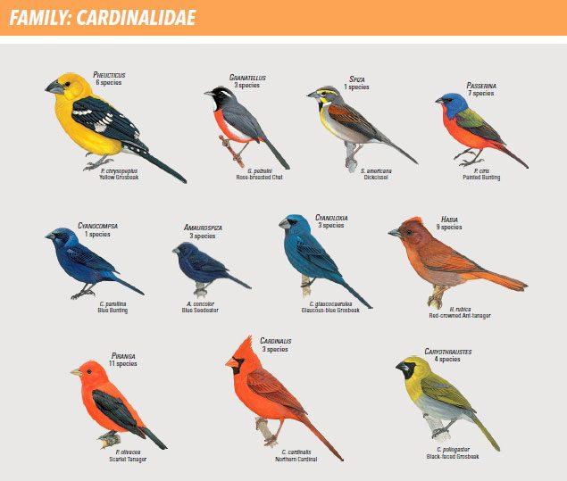 All Types Of Birds Www Imghulk Com