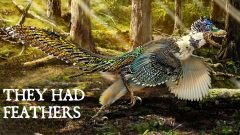 They Had Feathers: Is the World Ready to See Dinosaurs as They Really Were?