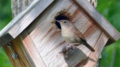 House Wren by Gordon Parker via Birdshare