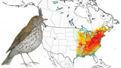 Wood Thrush: Animated Abundance Map from State of North America