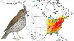 Wood Thrush: Animated Abundance Map from State of North America