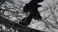 Top Thirteen Spooky Birds