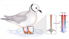 How Do Gulls Deal With Cold Feet?