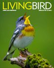 Living Bird spring 2017 cover image. photo by Brian Small
