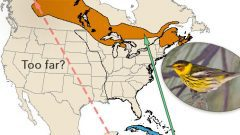 Cape May Warbler: Toews map to boreal
