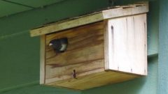Dark-eyed Junco using a nest box, by Melissa Sherwood