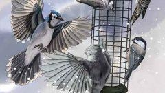 Feeder Bird Flight Club. Illustration by Jillian Ditner