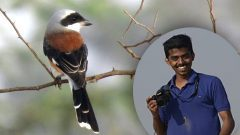 K. Selvaganesh, December 2017 eBirder of the Month