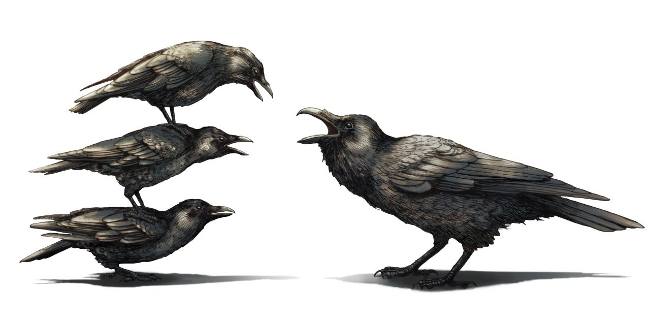 crows have a mob mentality toward ravens all about birds