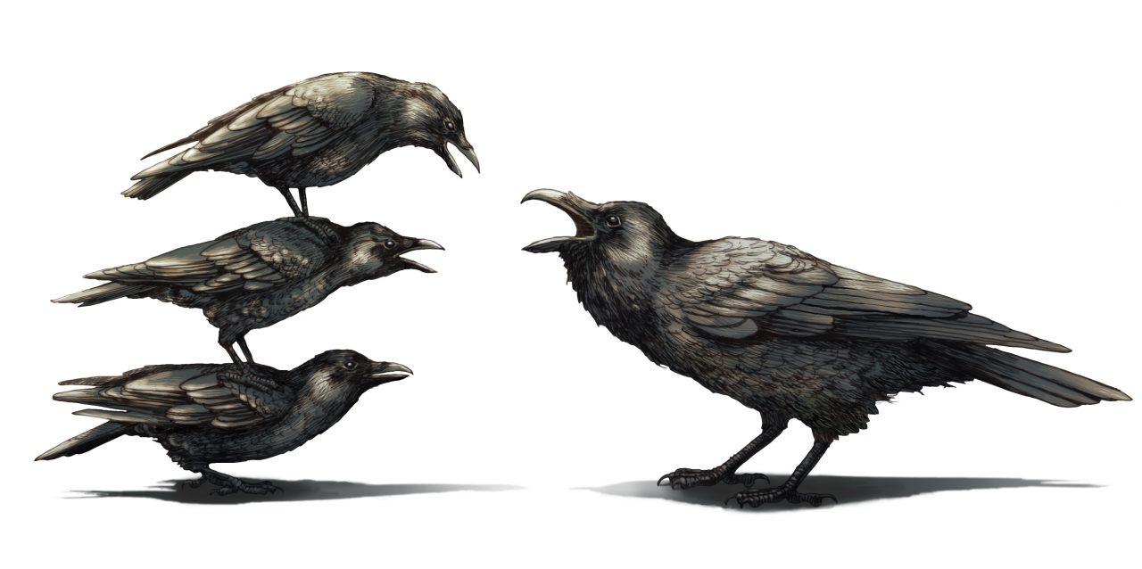 Crows versus Raven. Cornell Lab Bartels Science Illustrator Phillip Krzeminski.