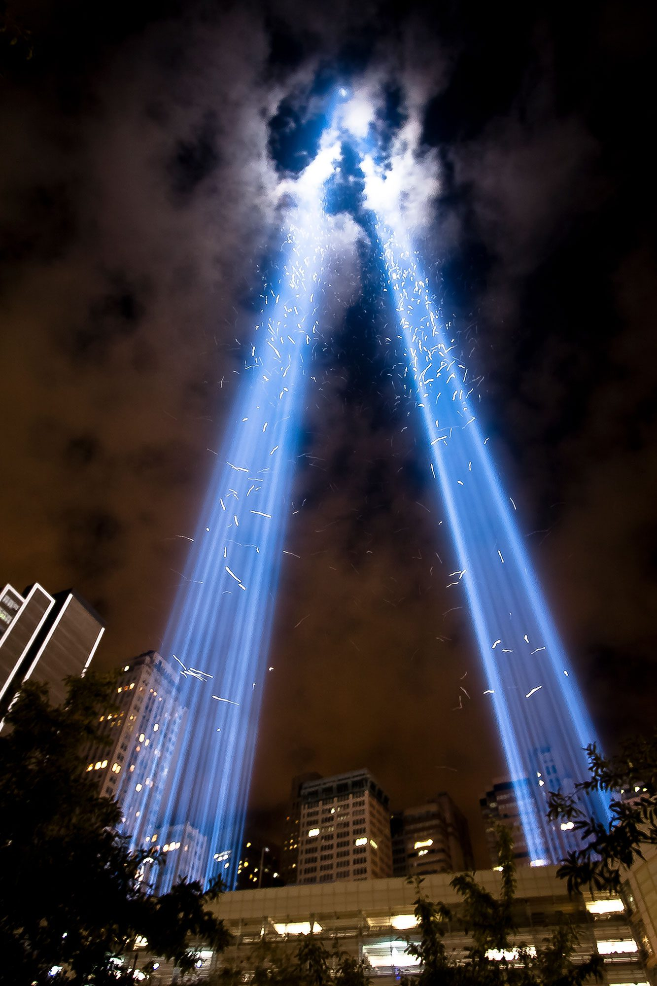 The 9/11 Tribute in Light Is Helping Us Learn About Bird