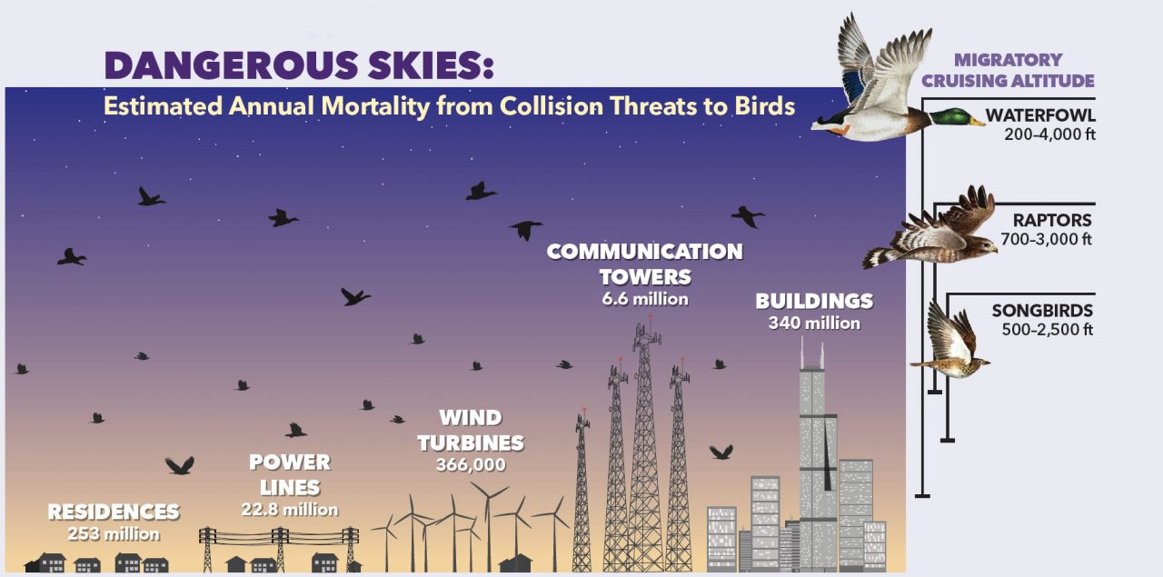 Bird mortality estimate sources: SR Loss, et al. (2012). Direct human-caused mortality of birds. Annual Review of Ecology, Evolution, and Systematics 46: 99-120. Wind turbine estimate—SR Loss, pers. comm. Migration elevation sources: waterfowl—Ducks Unlimited; raptors—P Kerlinger, et al. (1985). Flight behavior of raptors during spring migration in South Texas studied with radar and visual observations. Journal of Field Ornithology 56: 494-502. songbirds—KP Able. (1970). A radar study of the altitude of nocturnal passerine migration. Bird-Banding 41: 282-290. Graphic by Bartels Science Illustrator Megan Bishop