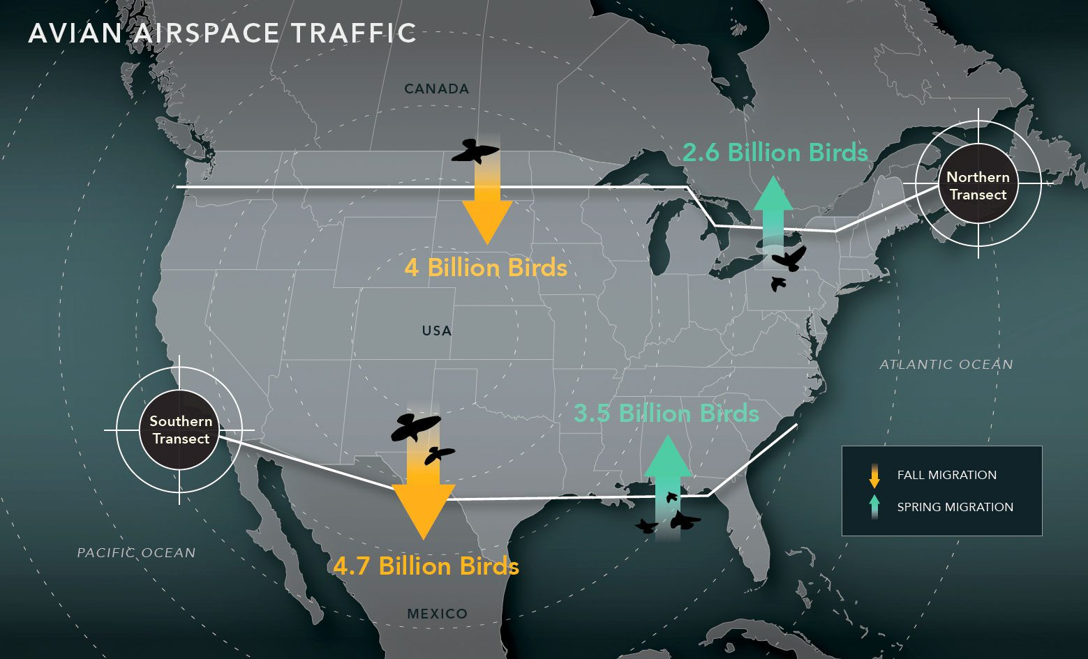 4 Billion Birds Will Fly Through American Airspace This Fall | All ...