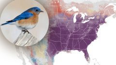 eBird status and trends. Eastern BLuebird by Alix d
