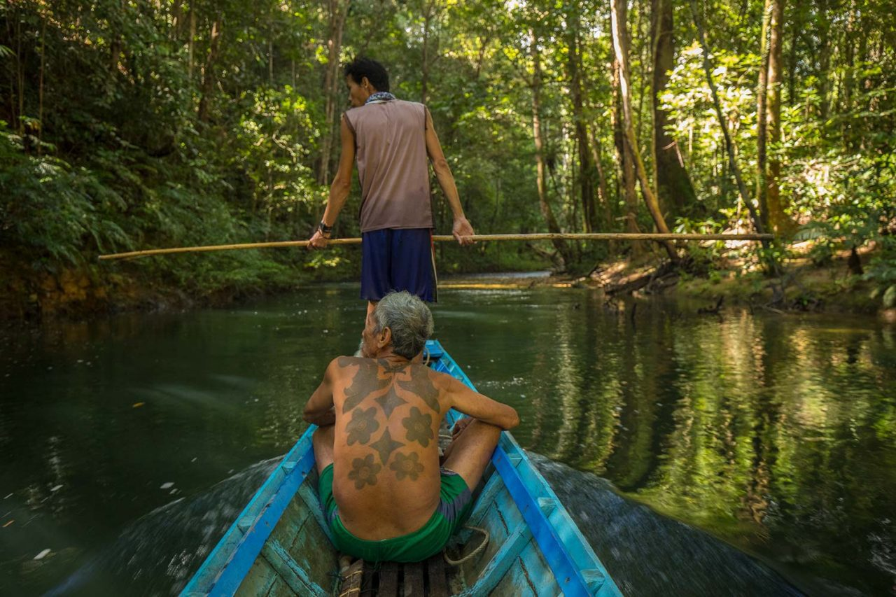 Janggot travels upriver in the Sungai Utik forest of Indonesia. Photo by Tim Laman.