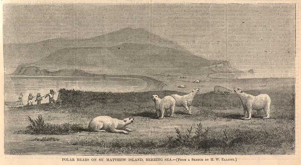 This print of polar bears on St. Matthew Island appeared in Harper
