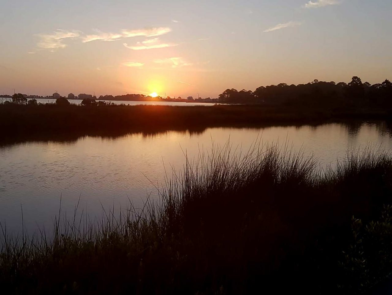 Clapper Rails clap and Seaside Sparrows trill as the sun rises over a gorgeous Alabama saltmarsh.